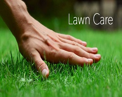 Lawn Care, Repair & Maintenance