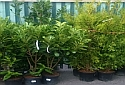 plants and trees - garden center galway